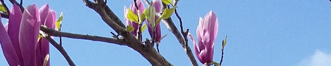 cropped-magnolia.png